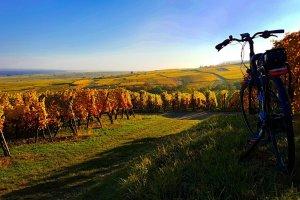 Alsace bike rental